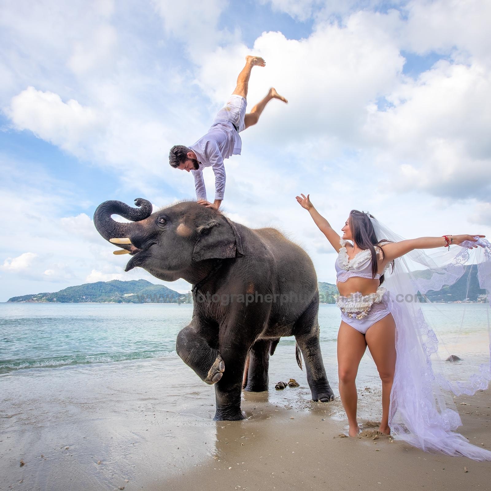 pre wedding photo taking with elephant at Phuket Thailand