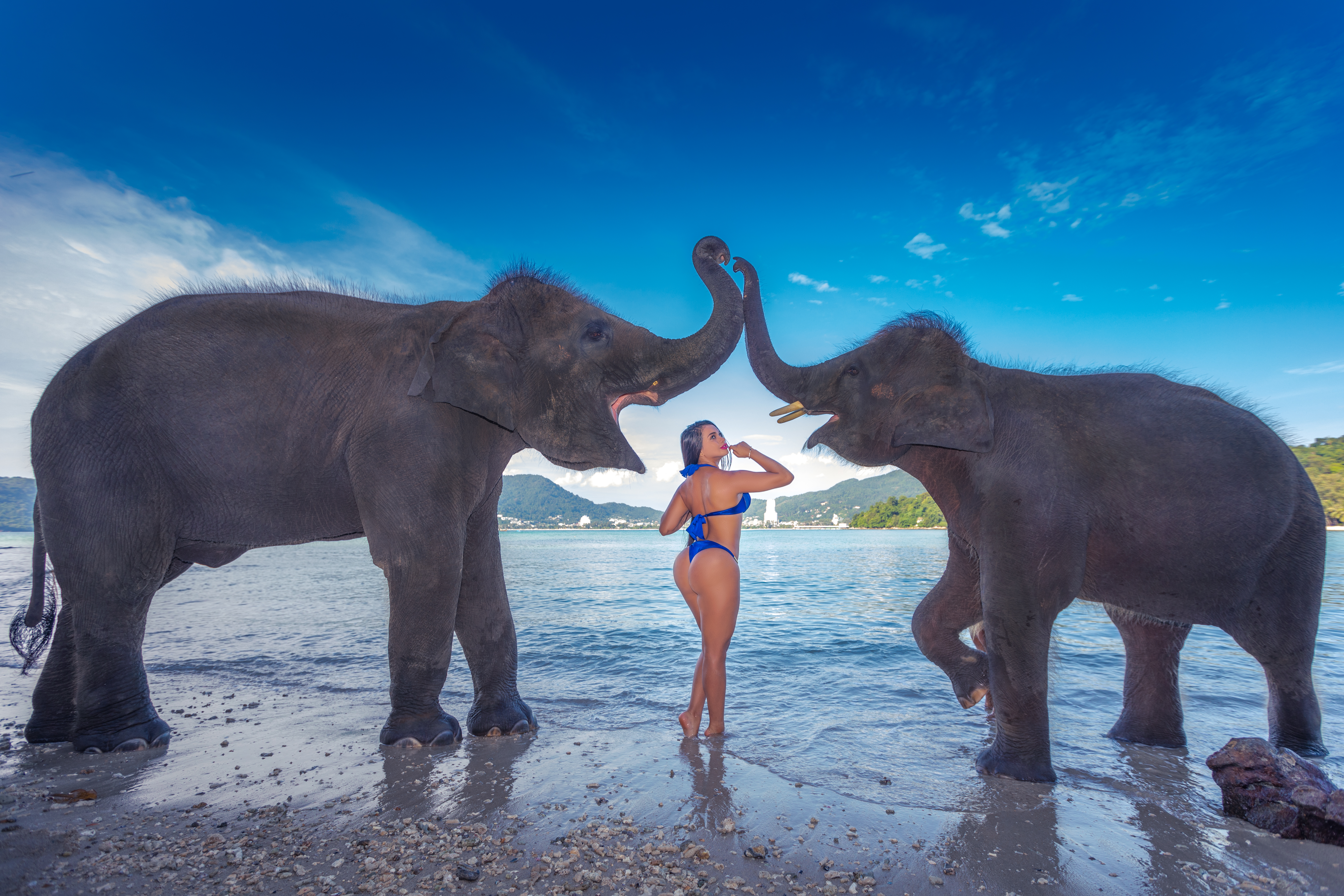 Phuket Portrait photoshoot with elephants